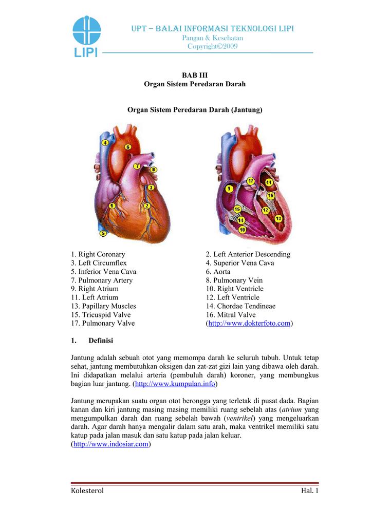 Tekanan Darah Saat Darah Meninggalkan Jantung Disebut : tekanan, darah, meninggalkan, jantung, disebut