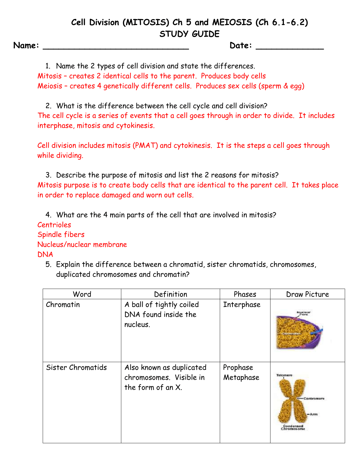 Cell Division Mitosis And Cytokinesis Worksheet Answers
