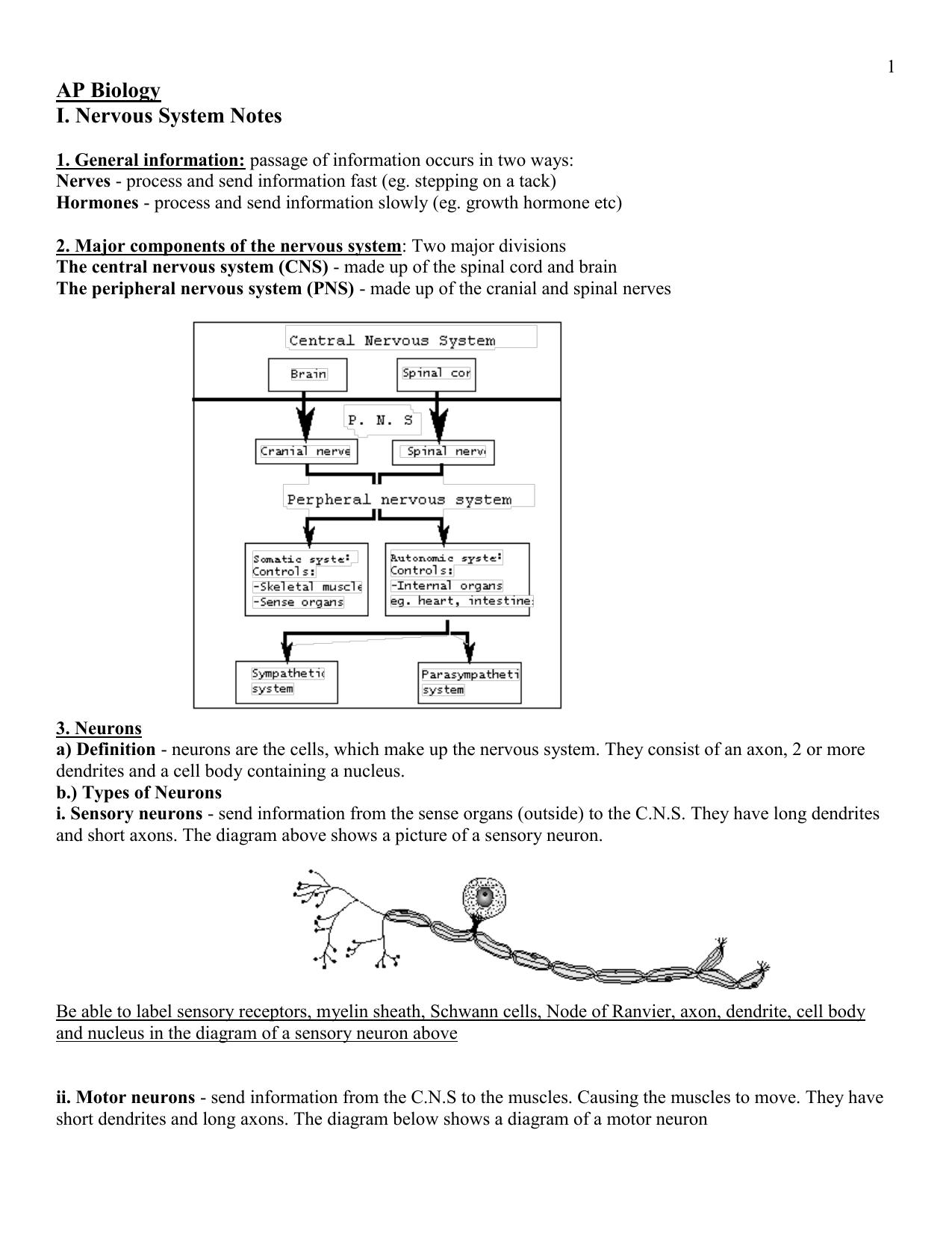 hight resolution of nervou system diagram full neorn