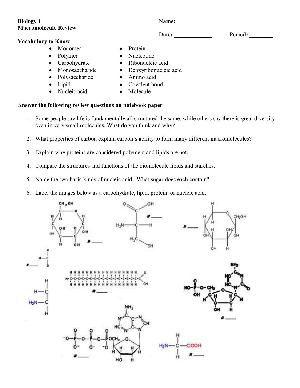 Biomolecule Review Worksheet