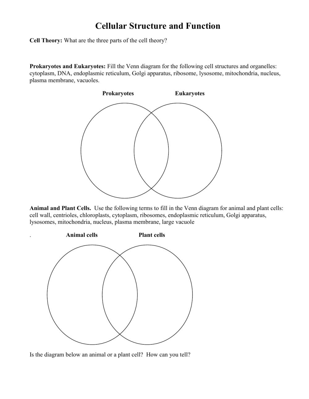 medium resolution of mitochondria vs chloroplast venn diagram cell organelles worksheet