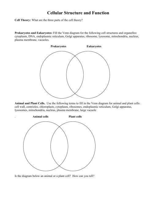 small resolution of mitochondria vs chloroplast venn diagram cell organelles worksheet