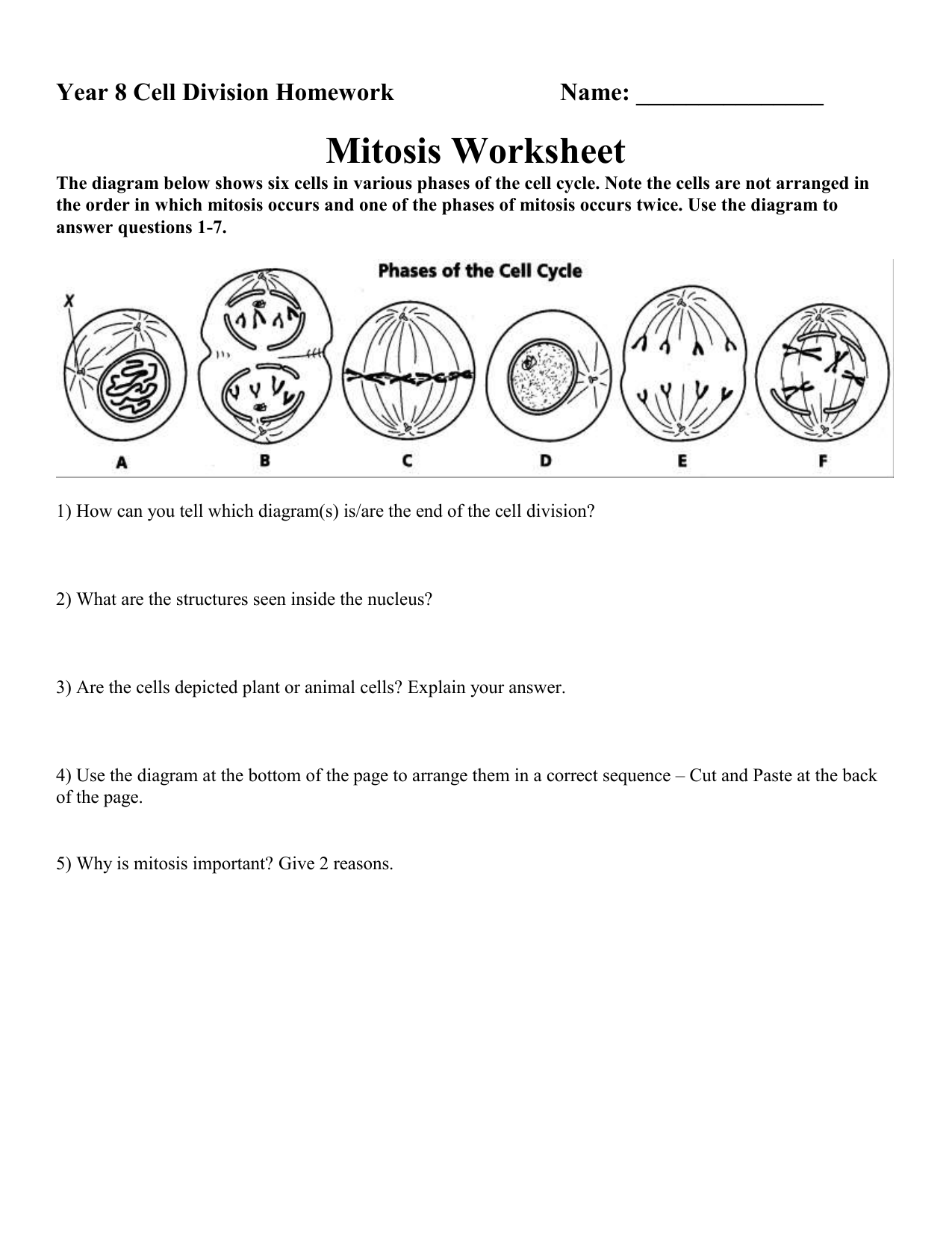 The Cell Cycle Worksheet Answers