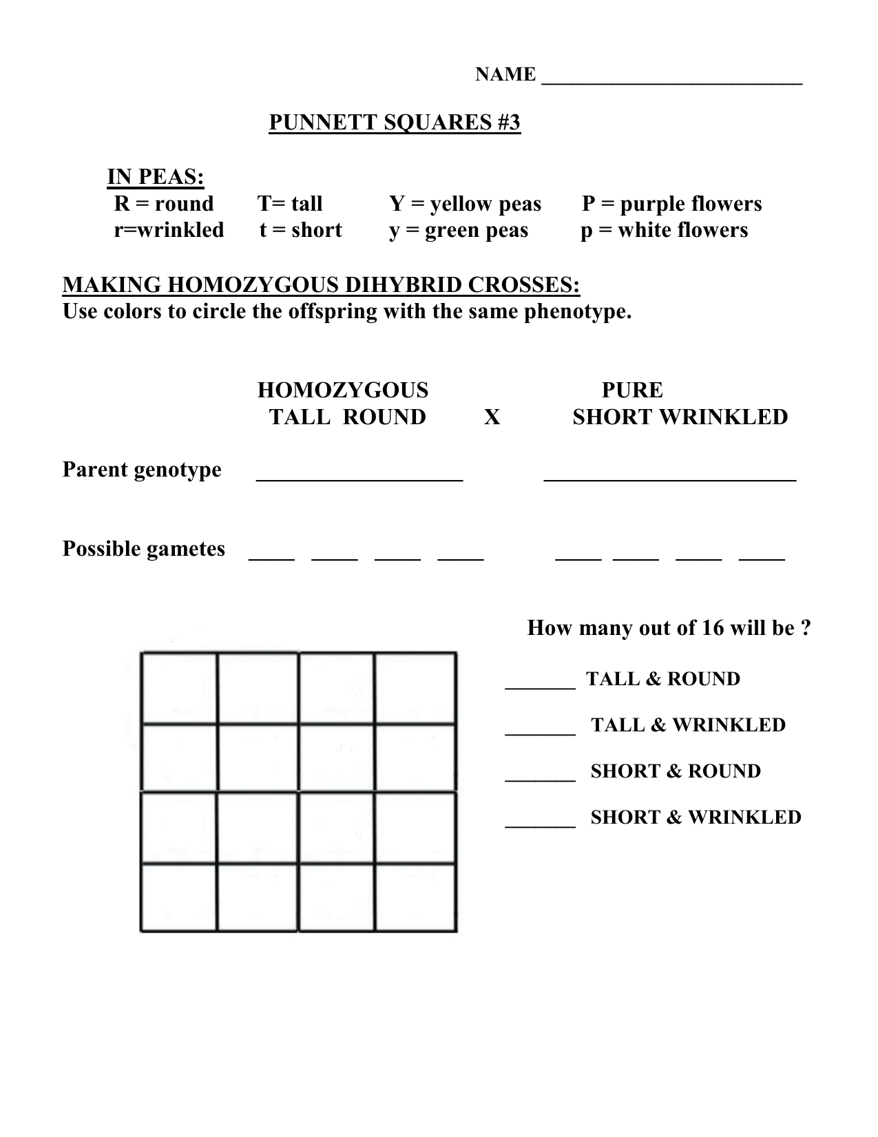 Collection Of Dihybrid Crosses Worksheet