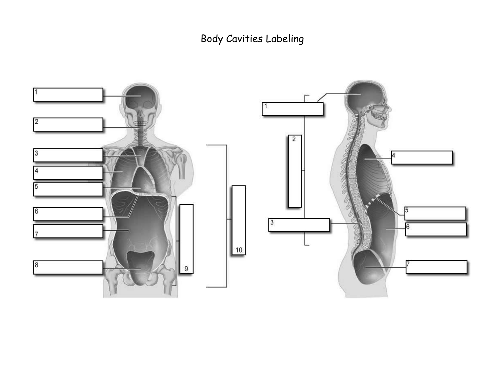 hight resolution of body cavity diagram labeled