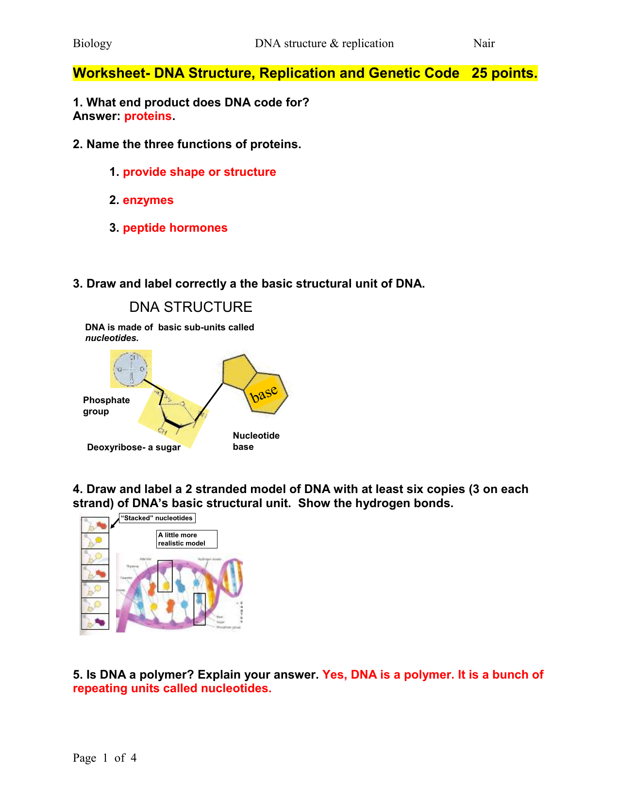 Dna Worksheet Structure Of Dna And Replication Answers