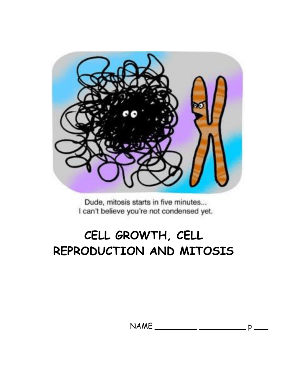 medium resolution of labeled onion cell diagram mitosi