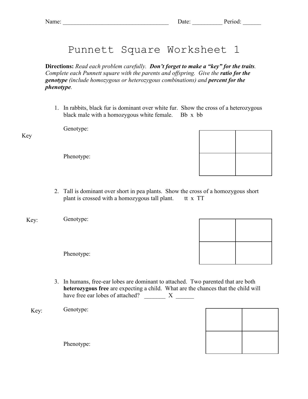 Punnett Square Worksheet 1 Answers