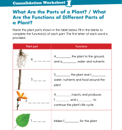 What Are the Parts of a Plant? / What Are the Functions of Different [ 1754 x 1241 Pixel ]