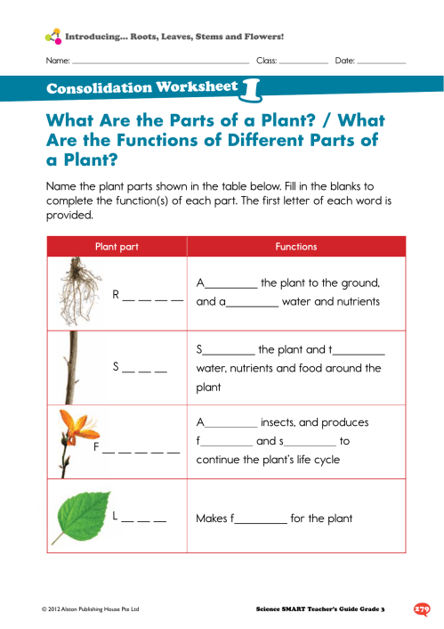 small resolution of What Are the Parts of a Plant? / What Are the Functions of Different