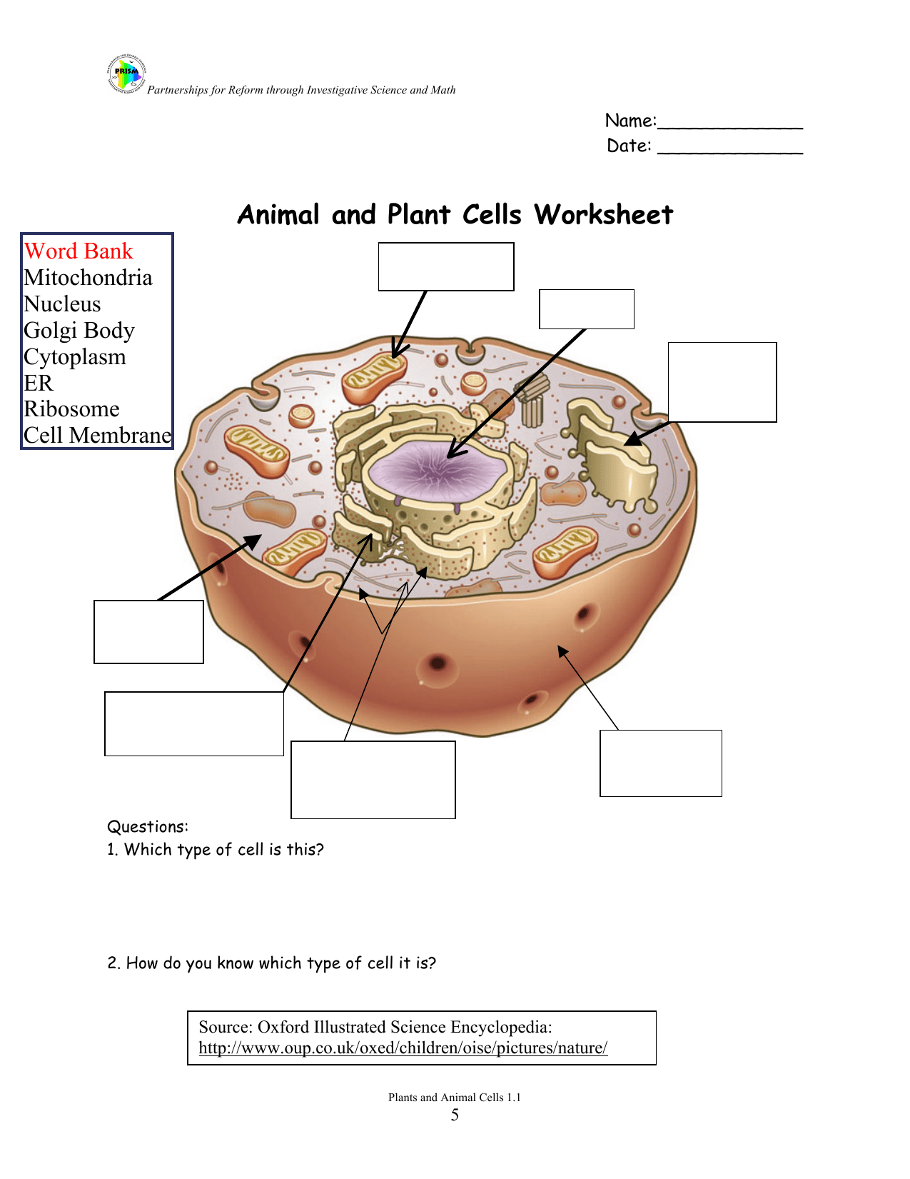 Animal Animal And Plant Cells Worksheet Answer Key Oxford