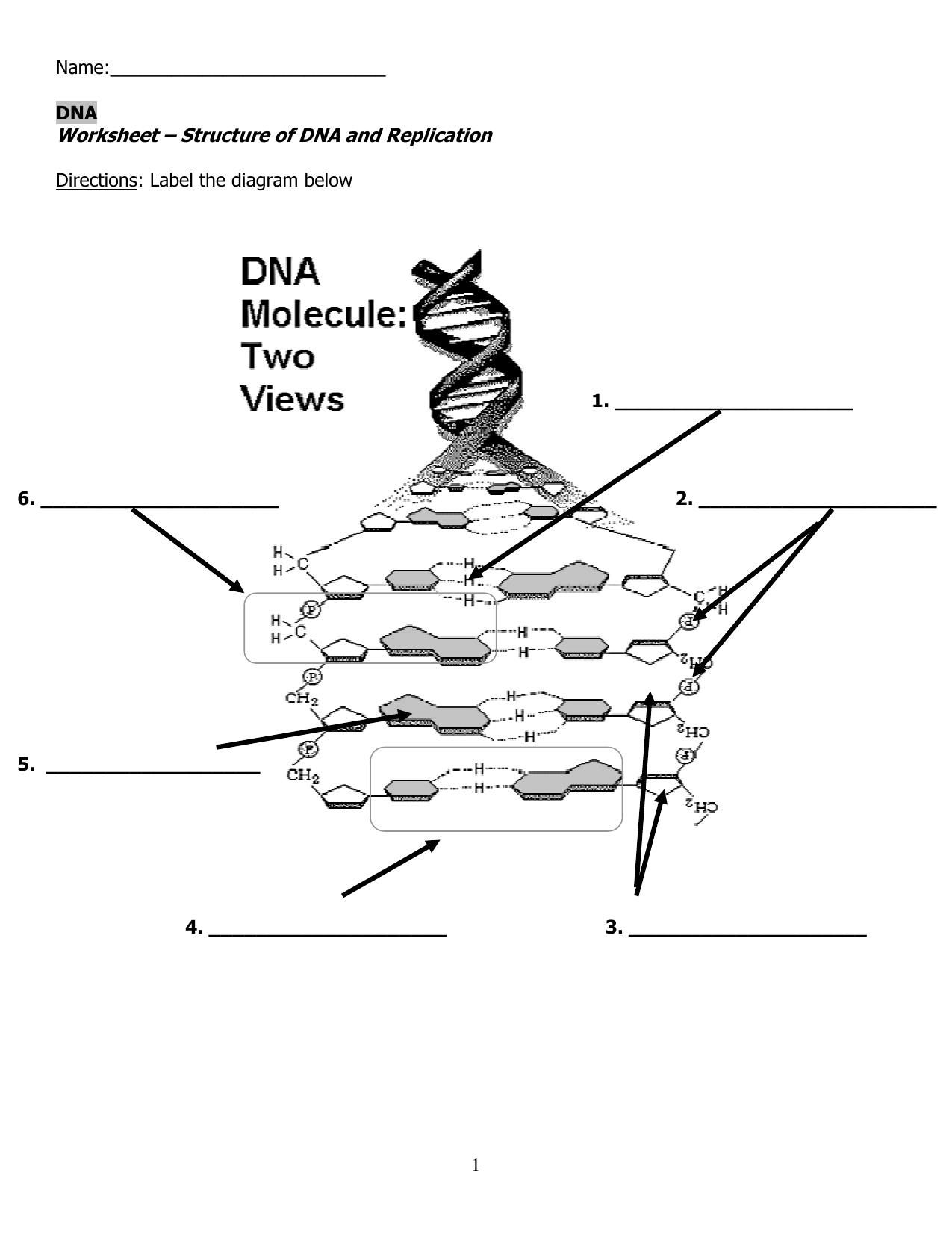 Worksheet Structure Of Dna And Replication