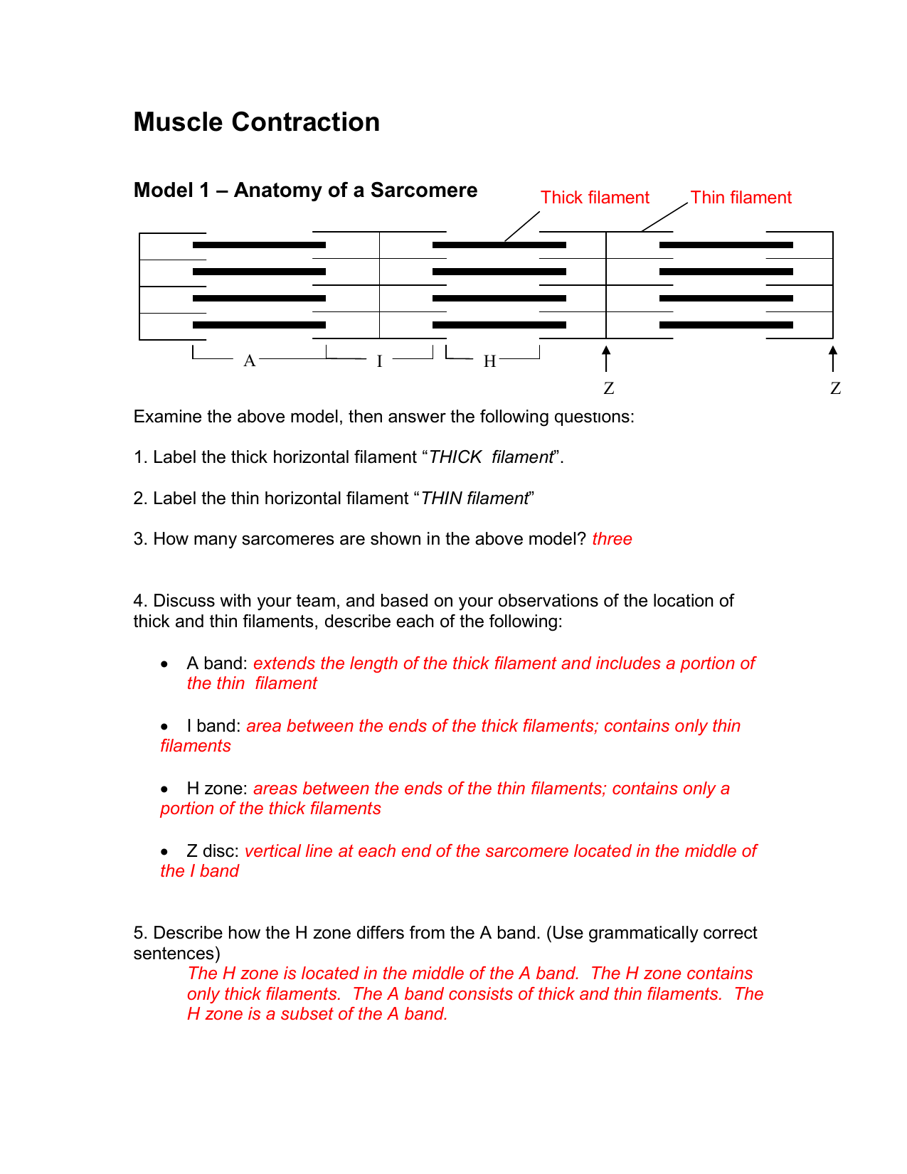 Anatomy Muscle Worksheet