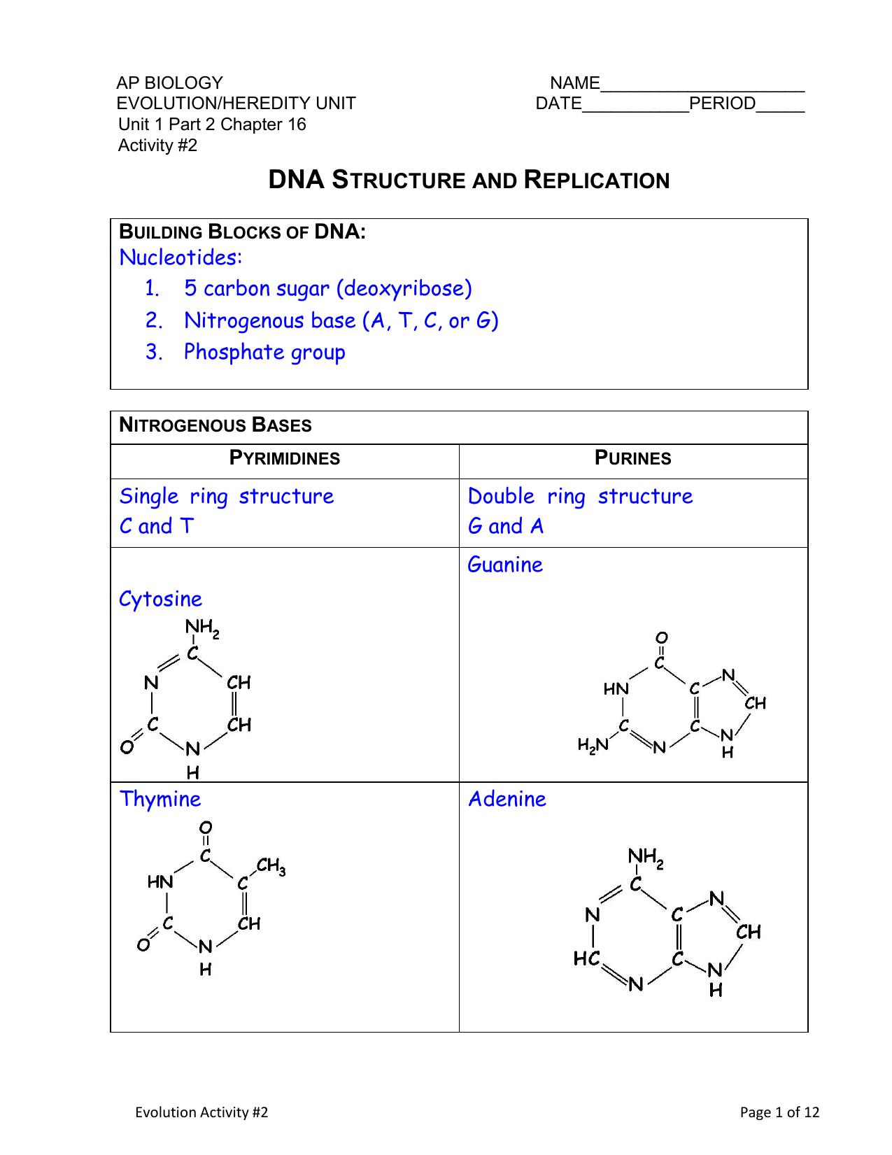 hight resolution of nitrogeneou base dna diagram