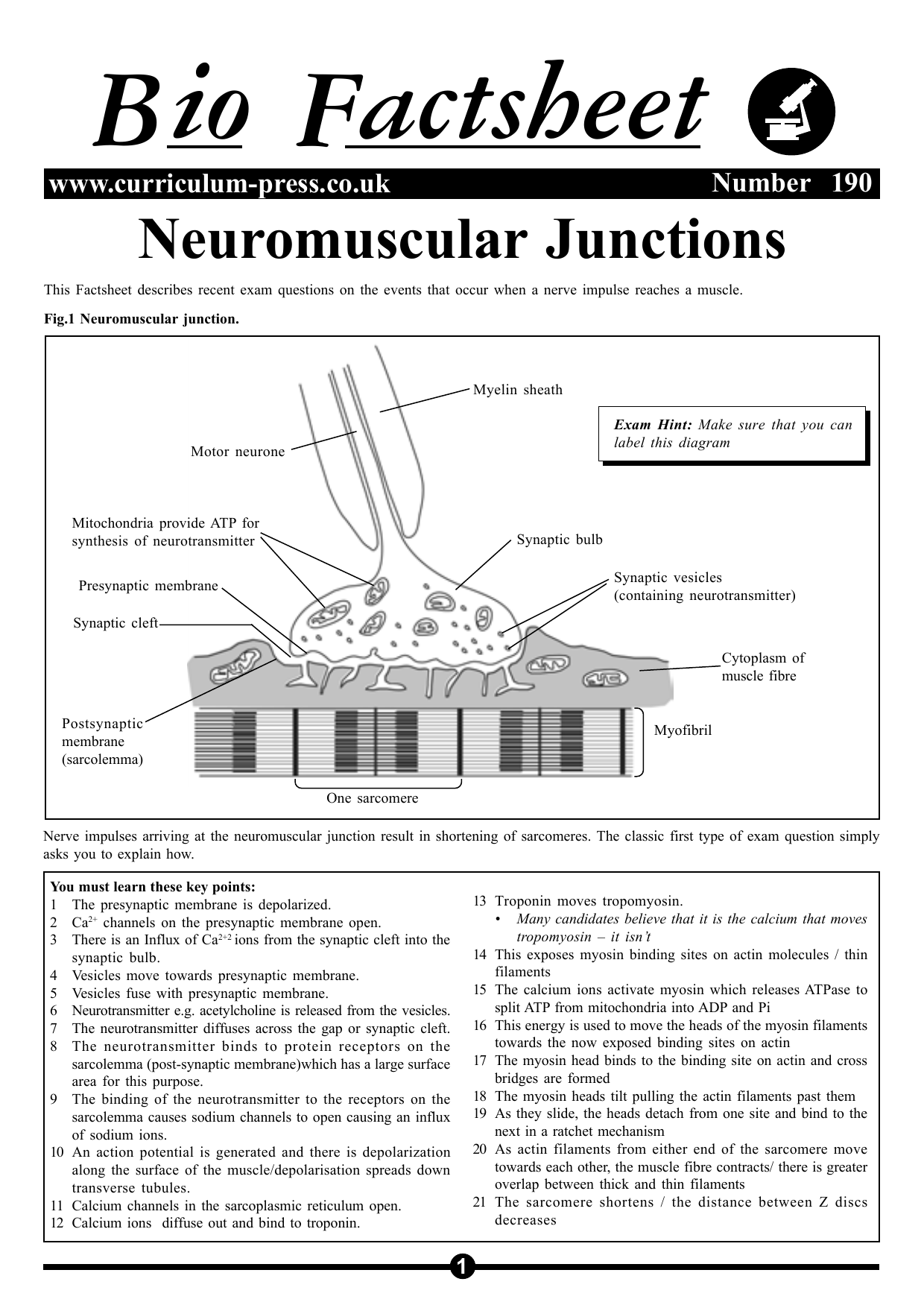 Sarcomere Neuromuscular Junction Labeled Diagram