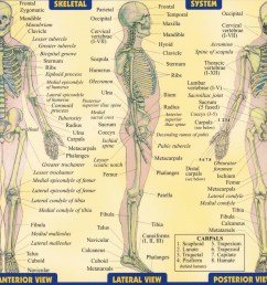 detailed skeleton diagram [ 1300 x 898 Pixel ]