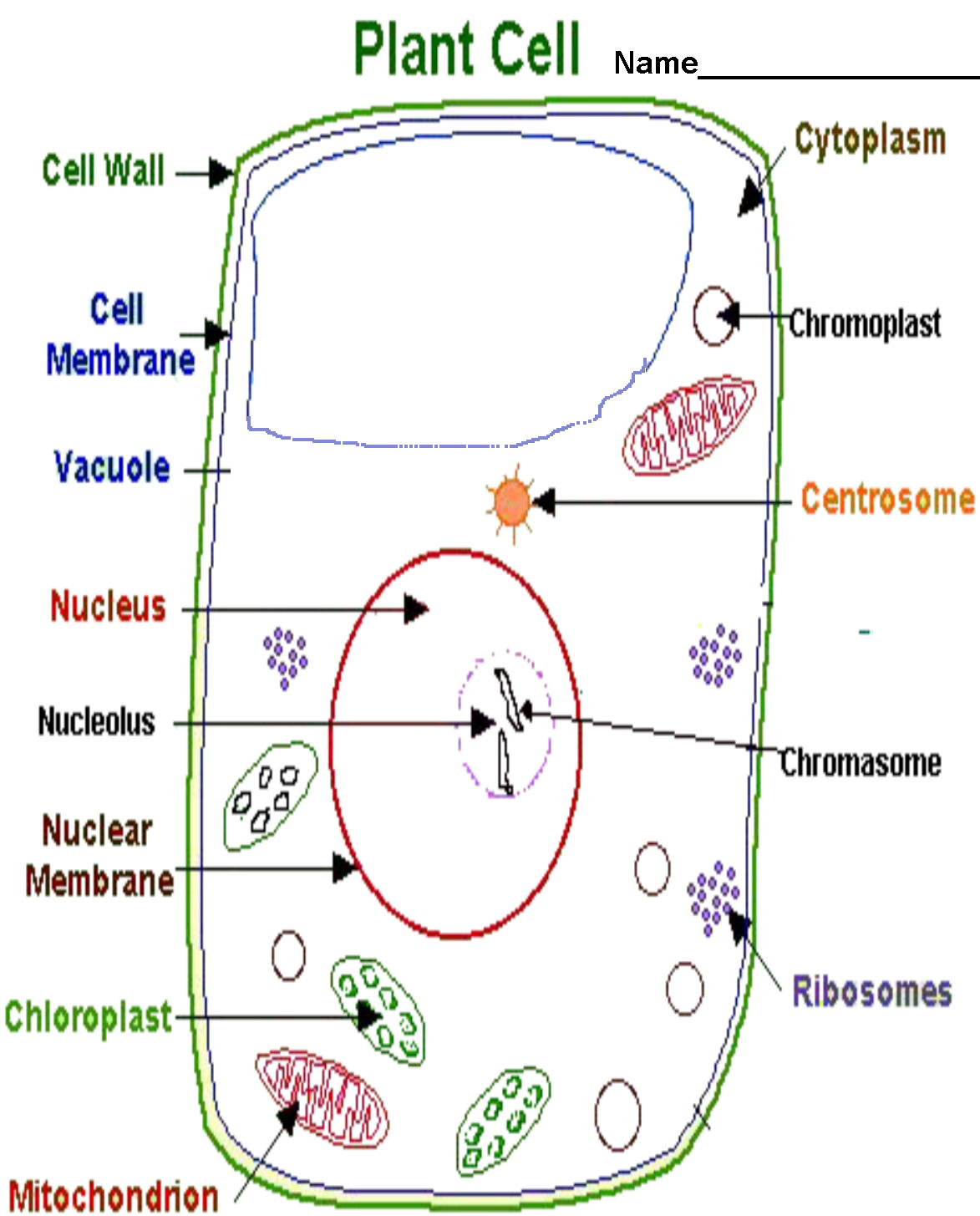 hight resolution of diagram part of cell organelle