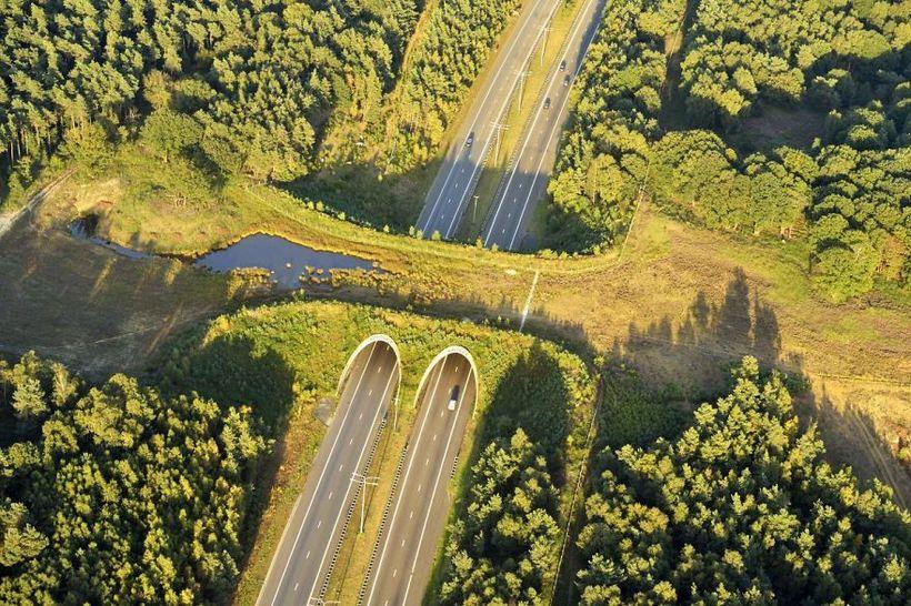 10 натуральных мостовых, которые помогают животным остаться в живых