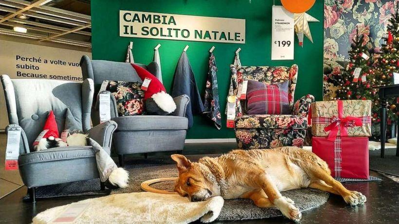 IKEA в Италии пустила к себе бродячих собак на зимовку