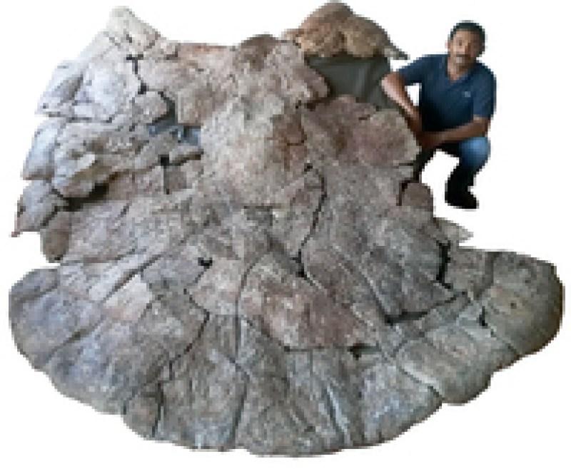 Ученые нашли останки гигантской черепахи, которая была размером с автомобиль
