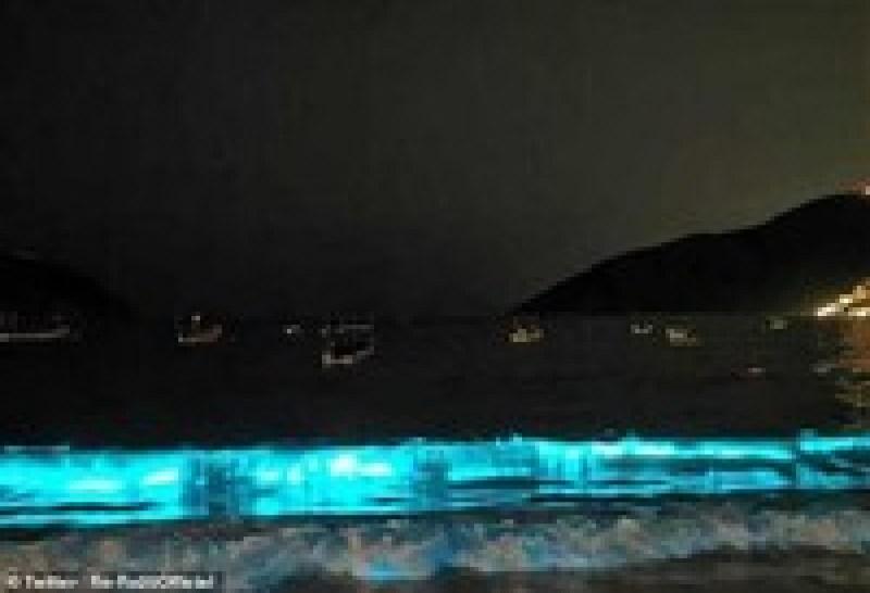Мексиканский пляж впервые за 60 лет начал светиться