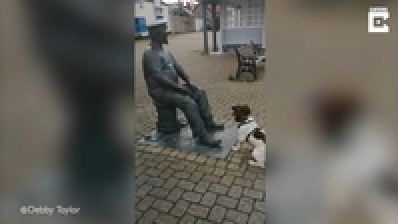 Видео: Собака пытается поиграть с памятником, приняв его за человека