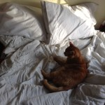 Aesthetic Bed Cat And Comfy Image 4057321 On Favim Com