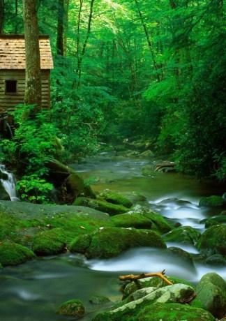 Top 35 hình ảnh dòng suối đẹp nhất thế giới full HD