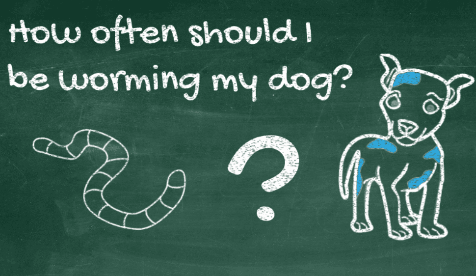 How Often Should I Worm My Dog?