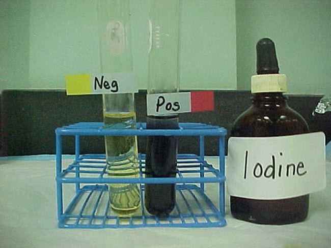 Test tube with yellow liquid labeled neg, test tube with black liquid labeled pos, and stoppered bottle filled with iodine (Eighth Grade Science)