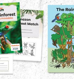 Printable: Rainforest Animal Flipbook for Grades 3-5 - [ 800 x 1368 Pixel ]