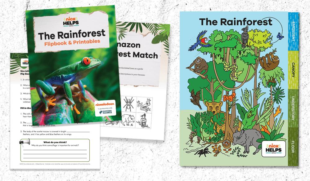 medium resolution of Printable: Rainforest Animal Flipbook for Grades 3-5 -