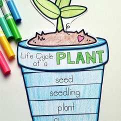 Parts Of A Sunflower Diagram Meriva B Wiring Diagrams 13 Creative Ways To Teach Plant Life Cycle - Weareteachers