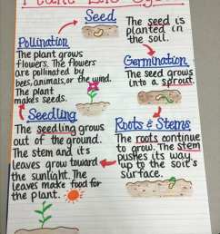this anchor chart breaks down plant life cycle in an easy to understand diagram focusing on key vocabulary words like germination and pollination  [ 800 x 1065 Pixel ]