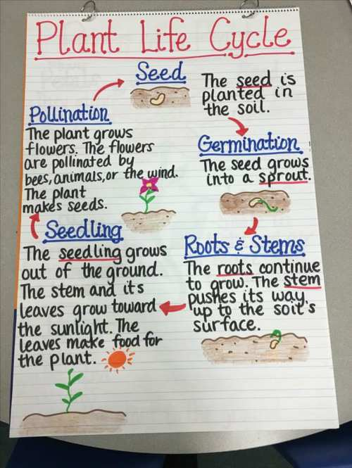 small resolution of 17 Creative Ways to Teach Plant Life Cycle - WeAreTeachers