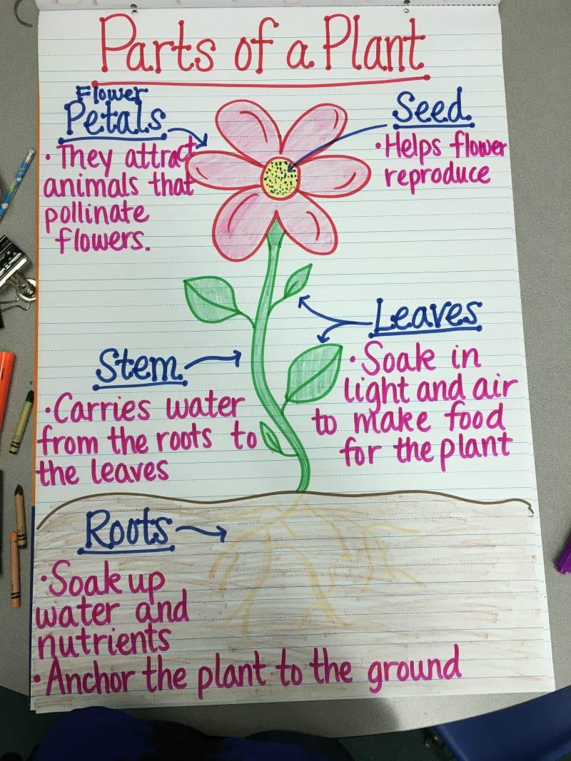 water cycle diagram worksheet to label christianity vs islam venn 13 creative ways teach plant life - weareteachers