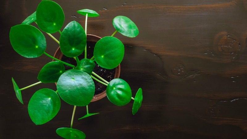 Best Light Bulbs Plants