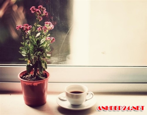 ảnh ly cà phê