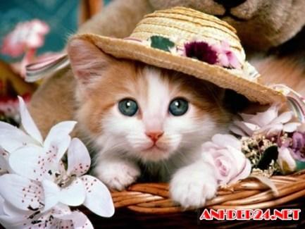 Hình ảnh con mèo dễ thương ai thấy cũng muốn nựng