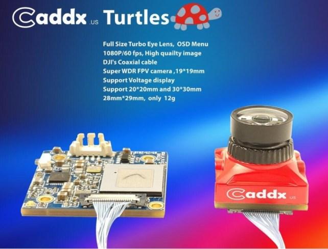 caddix_turtle_4