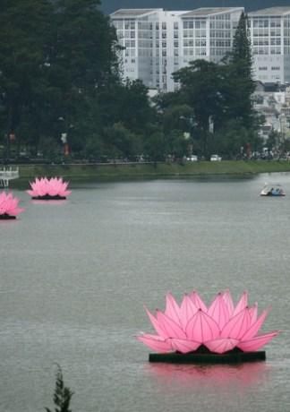 Mãn nhãn với 7 đài sen khổng lồ trên hồ Xuân Hương