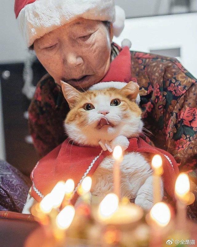 什麼叫做「把貓當孫養」!穿衣服、過生日「餵得白白胖胖」:來~阿嬤親一個 - 一起正能量
