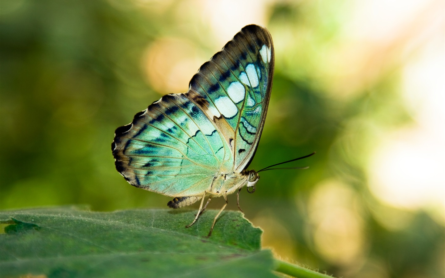 Two Cute Friends Wallpaper Wallpaper Green Or Blue Wings Butterfly Leaf Insect