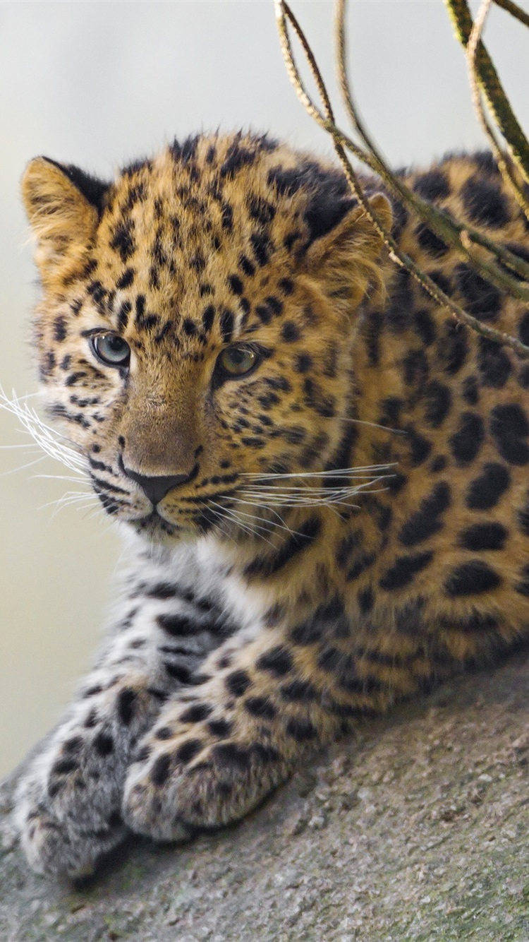 Cute Wallpapers For Iphone 5c Wallpaper Cute Leopard Cub 3840x2160 Uhd 4k Picture Image