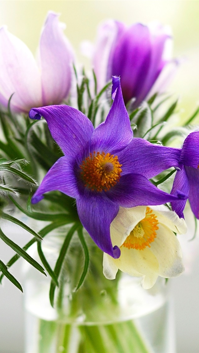 Fall Flowers Wallpaper Iphone Wallpaper Pulsatilla Flowers Vase Bouquet Purple And
