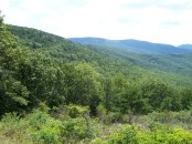 Sawmill Run Overlook