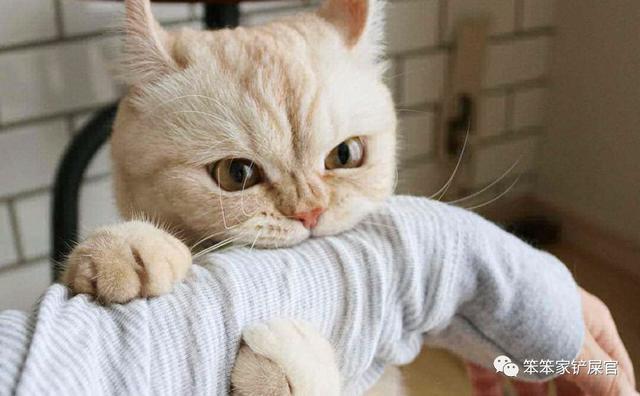 「貓為什麼總是喜歡咬人的手」:鏟屎官親自送上的手,不咬白不咬-ishmeitian.com - 生活好幫手