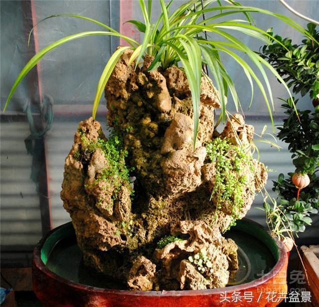 這種石頭上能直接種植盆栽綠植,上水石一座活的假山-fafa01.com - 看頭條