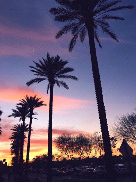 Hd Wallpaper Wallpapers Palm Trees Sunset Summer Image 2833442 By