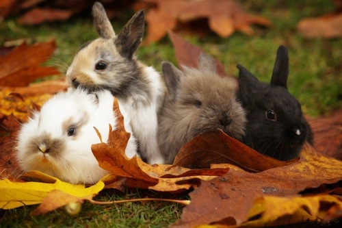 Free Fall Animal Wallpaper Autumn Bunnies Bunny Cute Fall Image 3532832 By